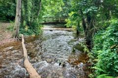 Nature Ambles 2020 Sept.  Bossington