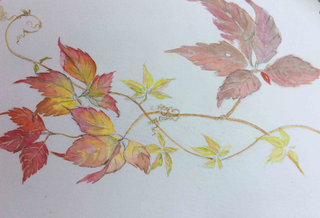 Image shows a watercolour painting of leaves